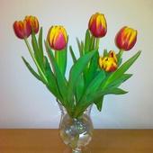 Tulipany......