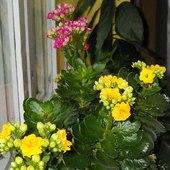 Zimowe kwiaty w natarciu:)