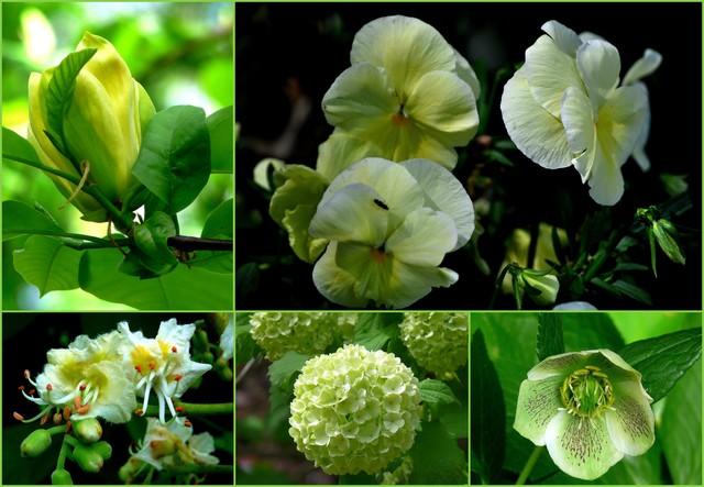 Niedługo ,,wybuchnie,,swą zieloną energią.......wiosna !!!!czekamy na Ciebie z Mieciem........bo chcemy Cię mieć
