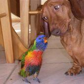 Papuzko, papuzko powiem ci cos na uszko ;)