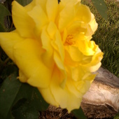 Słoneczka niedzielnego dla was kochani