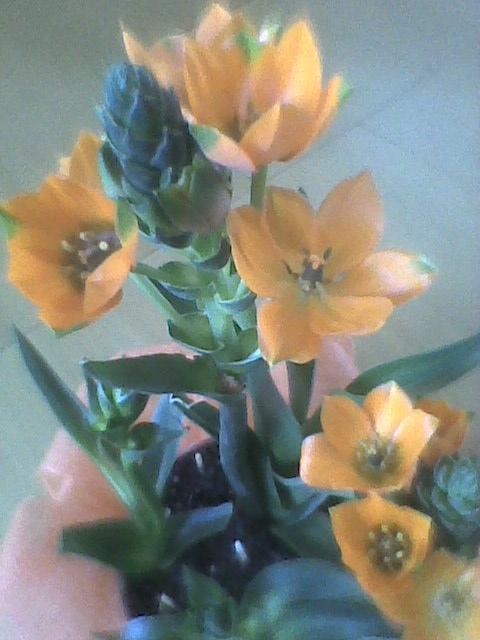 karczoch kwitnie  ;)