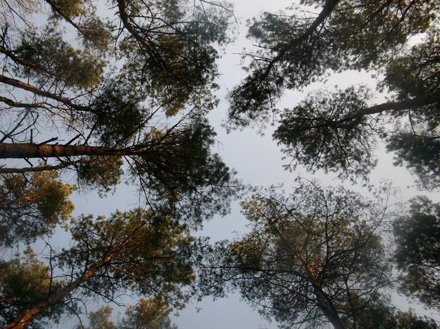 Oczywiście bylam w lesie :)