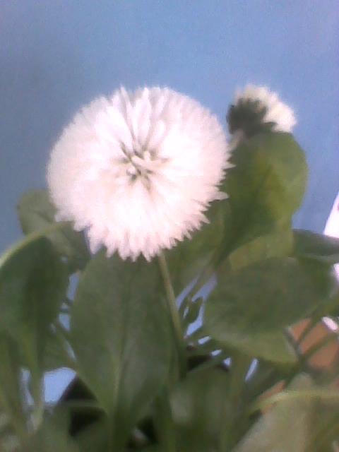 Pozdrawiam wszystkich serdecznie-ciepłego i słonecznego wtorku :)