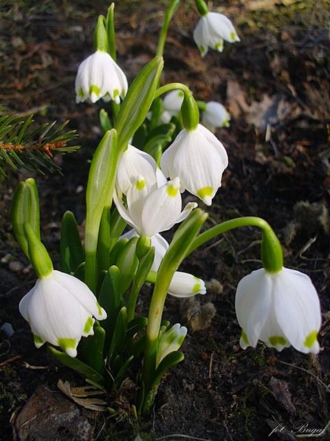 Witaj wiosno ;)