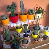 Kaktusowa rodzina..