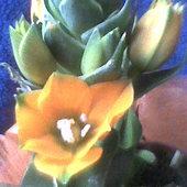 kolejny kwiatek