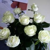 Róża, śnieżnobiałe róże