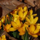 wiosna ...otacza mnie ze wszystkich stron............atakuje znienacka....jak ja lubię takie ..znienacka.