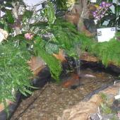 wystawa storczyków w OGRODZIE BOTANICZNYM W ŁODZI i rybki