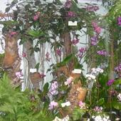 wystawa storczyków w OGRODZIE BOTANICZNYM W ŁODZI