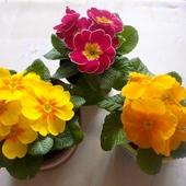 Z wiosennym pozdrowieniem :)