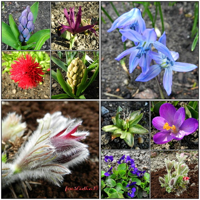 Wiosenne kwiaty w moim ogrodzie