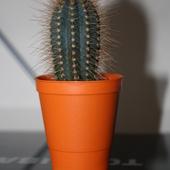 Kaktusik II