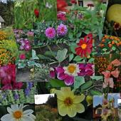 kwiatki w ogrodzie