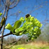 kwitnace drzewko ...........