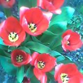 Miłego słonecznego dnia życzę :)