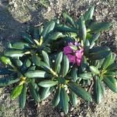 Nie tylko odkrywam,zaczęłam masowe sadzenie:)