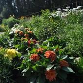 ogród w rozkwicie