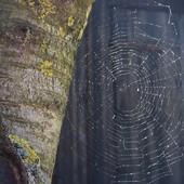 wiosenna pajęczyna