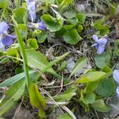 Znalazłam wiosnę :)