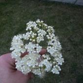 A co to tak pięknie kwitnie ?