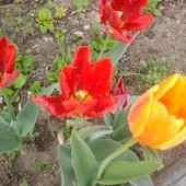 Jeszcze kwitną.
