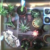 kaktusy i sukulenty na wakacjach ;)))