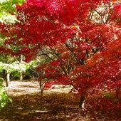 Wiec chodz pomaluj moj swiat ... na czerwono ;)