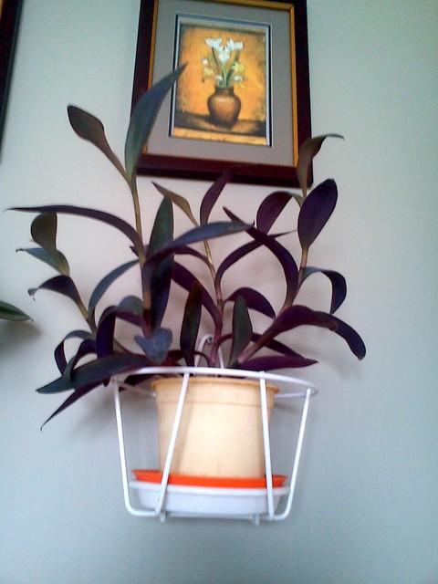 troszkę fioletu