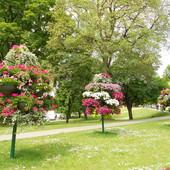 Drzewka kwiatowe