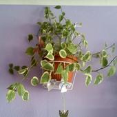 Radosna Roślinka :D