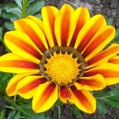 Życzę Wam, żeby rano świeciło piękne słoneczko :)
