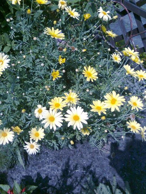 Takie sobie żółte kwiatki