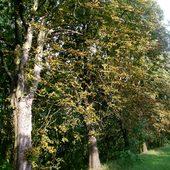 Chore kasztanowce , wyglądają jesiennie :(