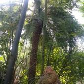 Dżungla :))