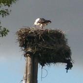Jeszcze trzymają się gniazda