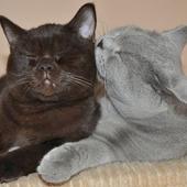 Kochane kotki :)