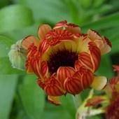 kwiatek na środę