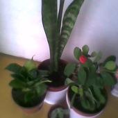 Rośliny od LucyK :)