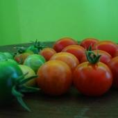 Adio, pomidory, czyli ostatnie pomidory tego lata:(