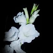 Biała dama ;)