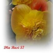 Dla Basi 57...Z najlepszymi życzeniami urodzinowymi