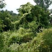 Dziki ogród