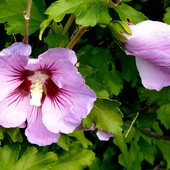 Dzisiaj ja życzę różowych snów :))