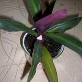 Jest kwiatuszek :)