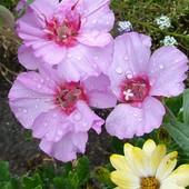 Pozdrowienia z deszczem :)
