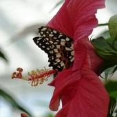 W nektarowym raju...