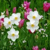 Wspomnienie wiosny