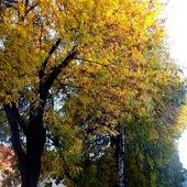 Jesień dotarła na moją ulicę